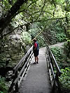 Waitomo Walk Way